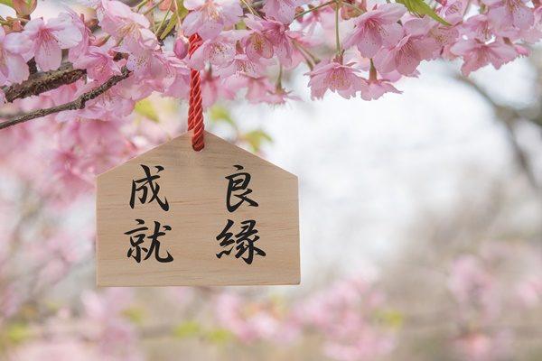 絵馬 桜の花 良縁成就