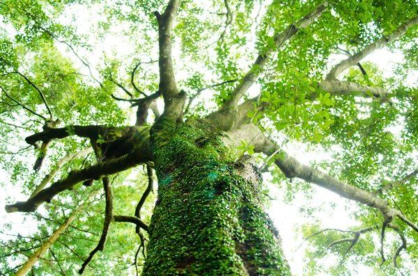 伊勢神宮 巨木 パワースポット
