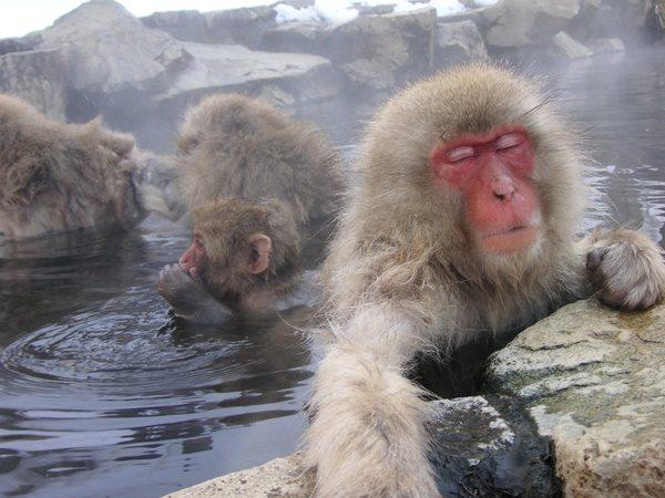 女子会・女子旅におすすめの国内温泉トップ10
